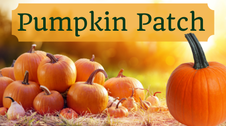 Pumpkin Patch (over a picture of the same)