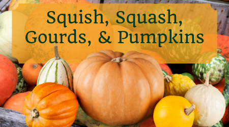 Over a field of gourds and squash - Squish, Squash, Gourds & Pumpkins